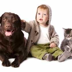 Perros y gatos viviendo con niños y bebés