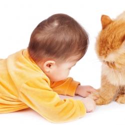 Bebés y gatos: ¿pueden convivir?